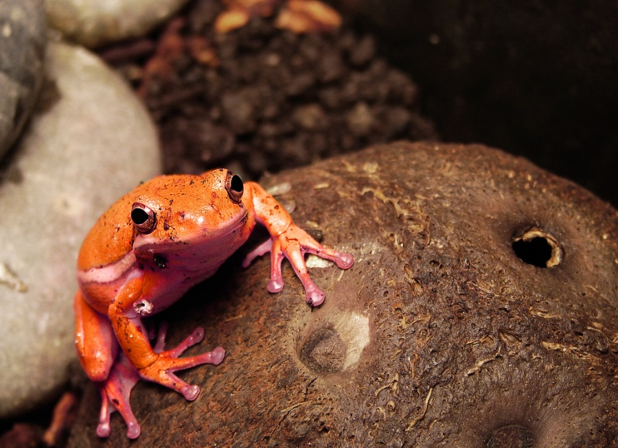 Is this frog that much better than the other?